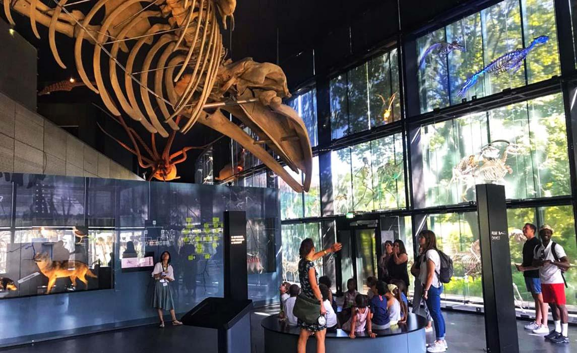 Le Muséum, musée d'histoire naturelle de Toulouse