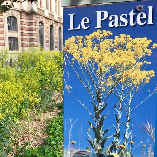 Le pastel à Toulouse